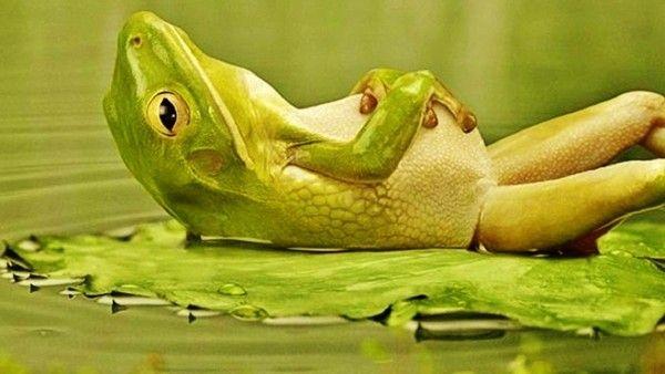 a-frog-relaxing_1083909569.jpg